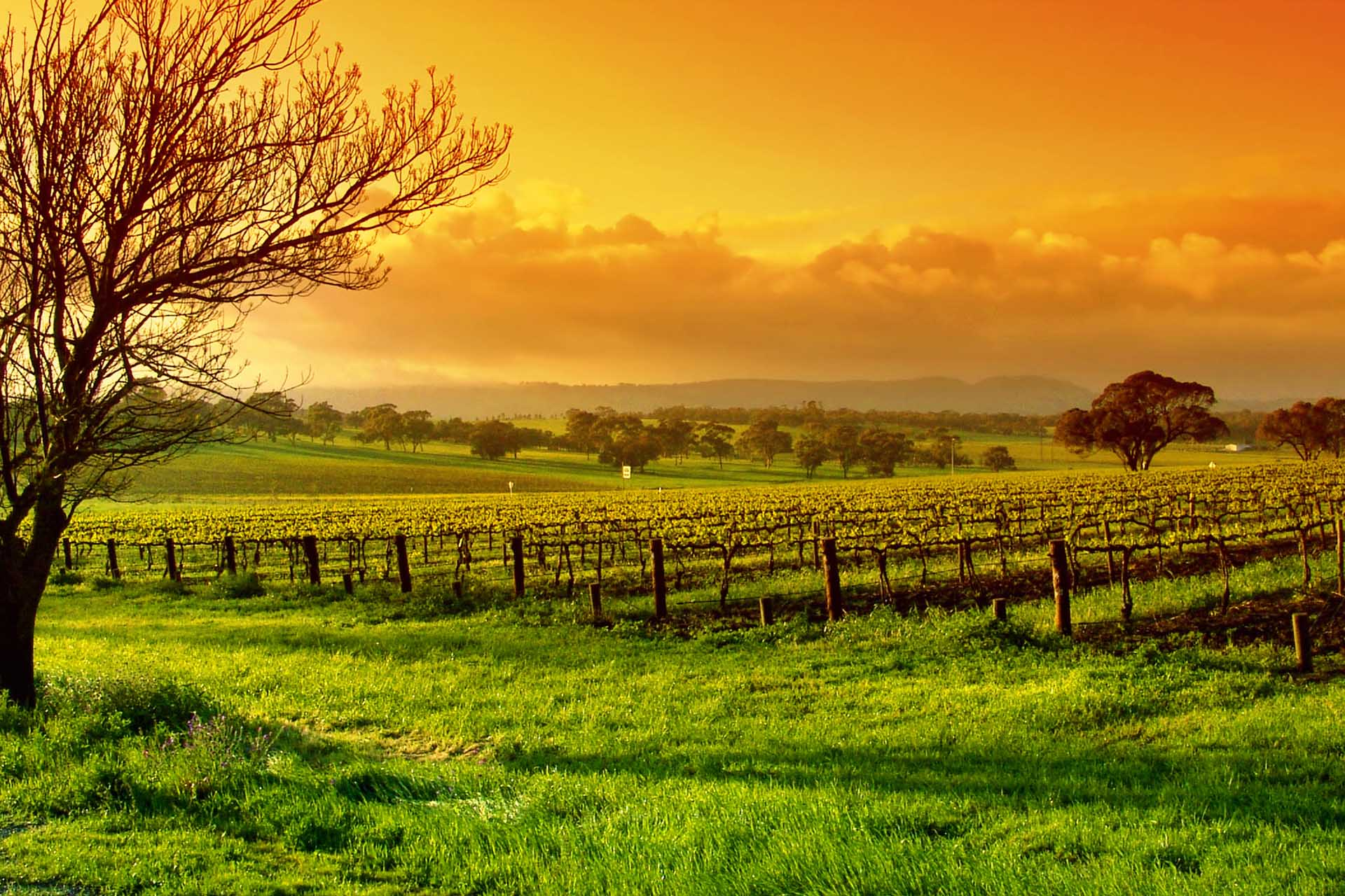 Yarra Valley Winery Tours Wine Food Tours Transfers